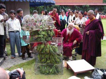 DVAXX-Bird-release-HH-Chatral-Rinpoche