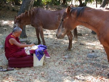 Rinpoche and horses